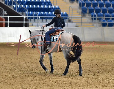 NOVICE HORSE OPEN AND  NP LEVEL 1 & 2