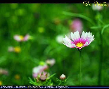 20090321 - Hong Kong Flower Show 2009