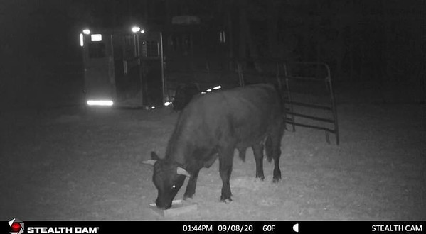 beefalo-py-091529_4