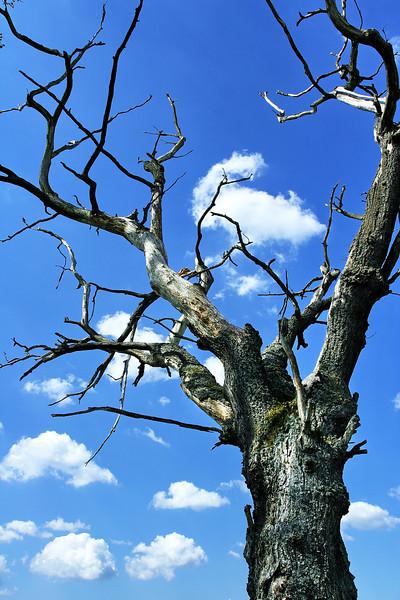 tree 11 .jpg