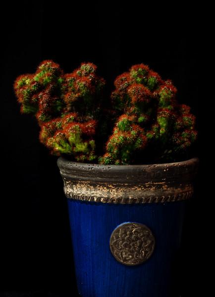 succulents Ektachrome pro 64 051620-.jpg