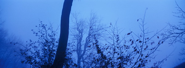 Wind blowing in a forest at dusk