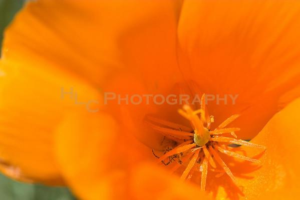 03/27/08 Quartz Hill, CA - wild flowers