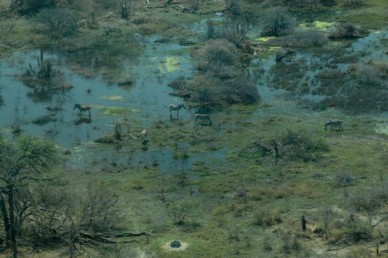 EPV0098 Okavanga Delta Wildlife.jpg