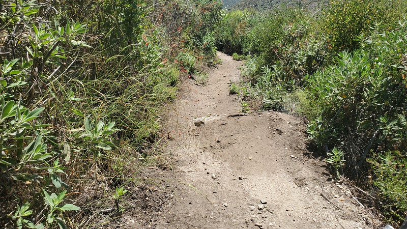 Blue Bug Trail small jump