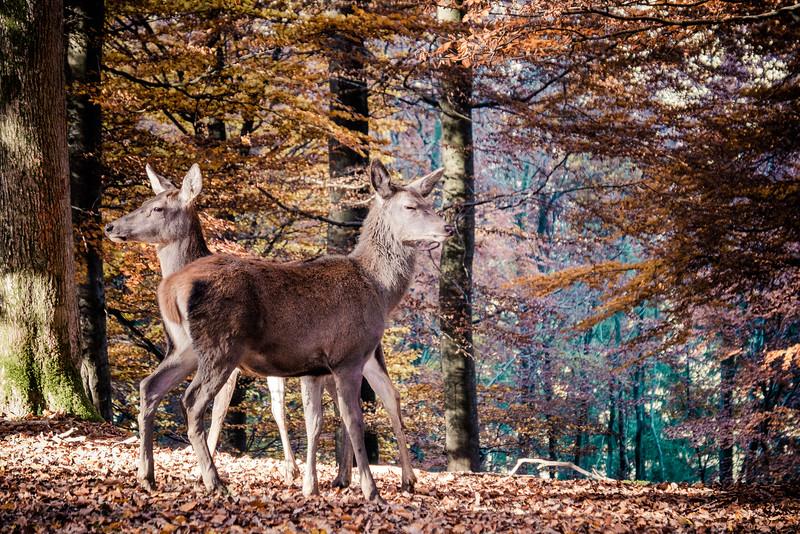 Wildpark Daun-02 november 2015-DSCF5674.jpg