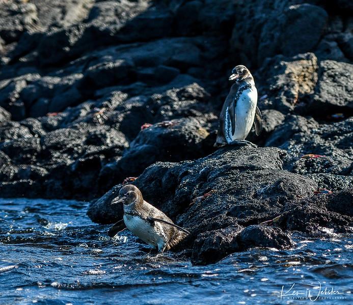 2018 Sombrero Island-7.jpg