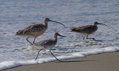 Birding in Monterey -August 2013