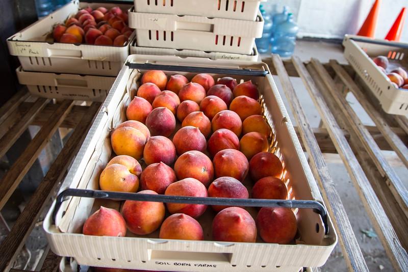 SoilBorn4668_Peaches.jpg