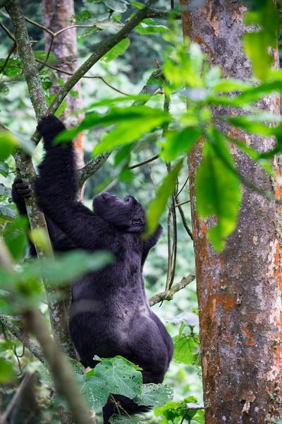 Uganda_T_Gor-2470.jpg
