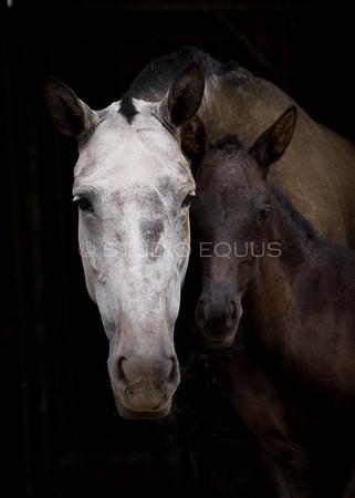 Foals 7.20.09