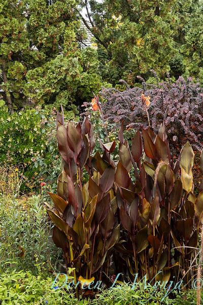Dietrick fall garden_2033.jpg