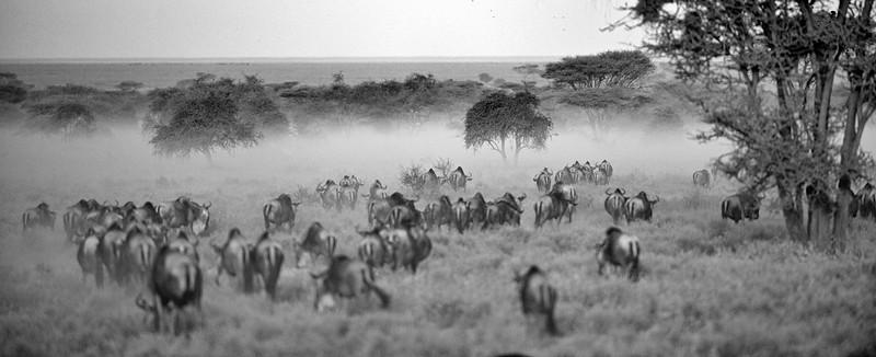 Tanzania 2013 583.jpg
