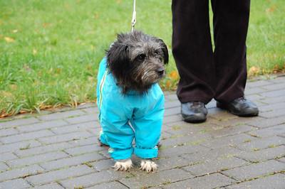 2011-10-02, Little dog Nayda