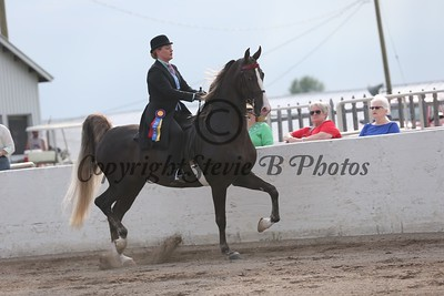 23. Bluegrass Series- 3 Gaited Country Pleasure Amateur/JR.Exhibitor
