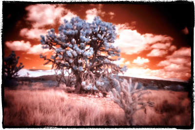 Color IR D810 with Holga Pinhole Adapter