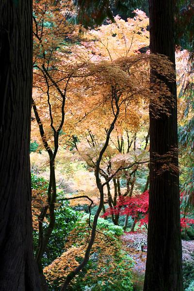 Portland Japanese Garden  11-11-11  3505.jpg