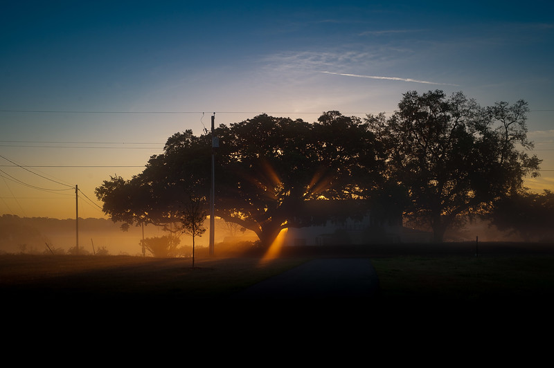 sun fog morning 2 (1 of 7).jpg