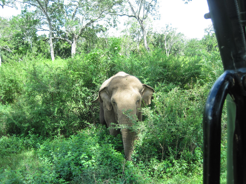 Sri_Lanka17-9762.jpg