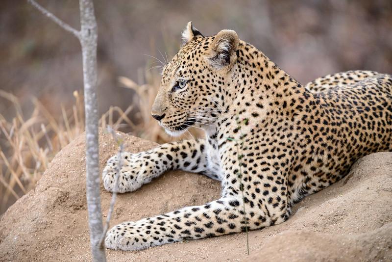 LeopardHills-20150827-5086.jpg