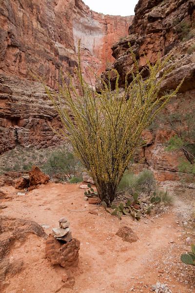 Grand Canyon October-0571.jpg