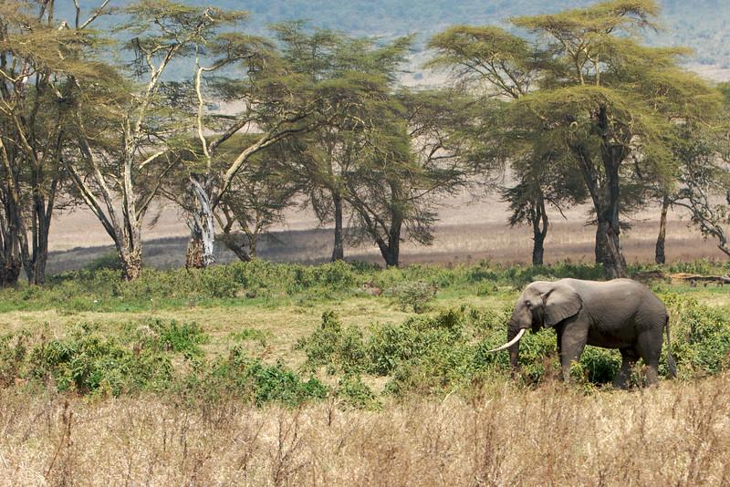 Tanzania - 31.jpg