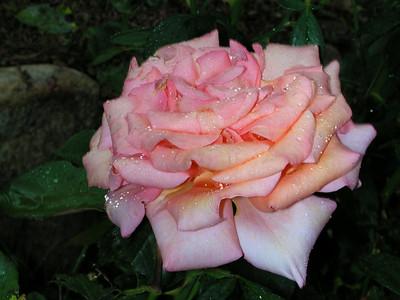 Flowers 2007
