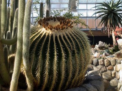 Arid House - Catalog of Cactus Species (new sorting)