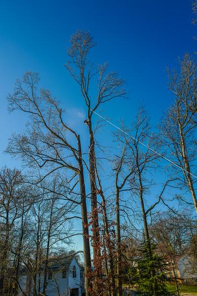 Tree-34.jpg