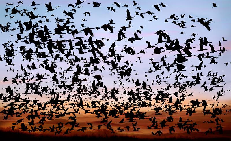 Liftoff-Crane Migration_Kearney, Nebraska 31x19.jpg