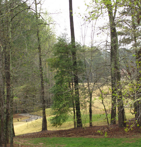 Champions View Milton Georgia Golf Community (26).JPG