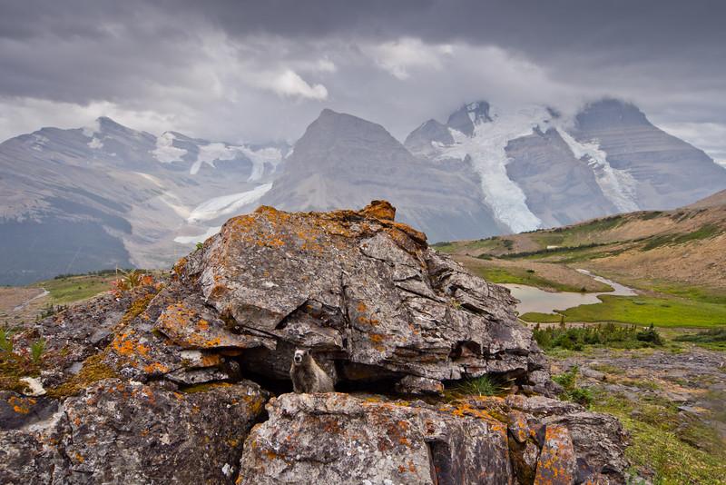 Hoary Marmot & Mount Robson