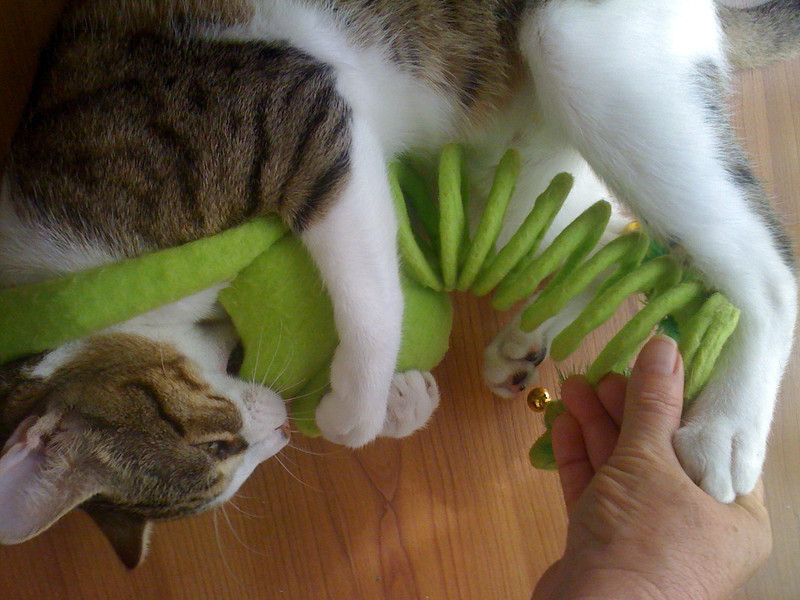 This toy is SOOO FUN as it has a few elements - the bells to attract them, the springy thingie & the arms are a crinkly sound!  BuBu LOVED this toy the most (well - not counting the paper bag he LOVED getting into