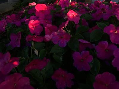 Various Flowering Plants