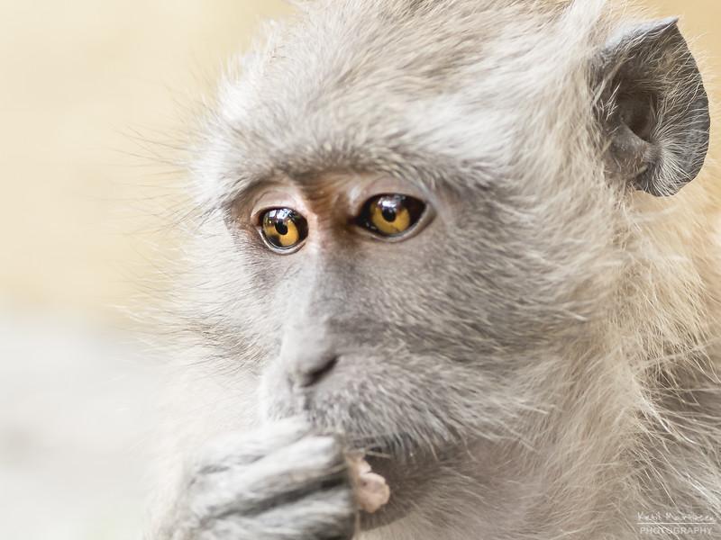 2017-12-22 Monkeys-3.jpg