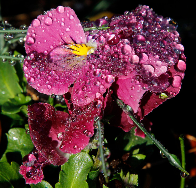 Bubbles of dew