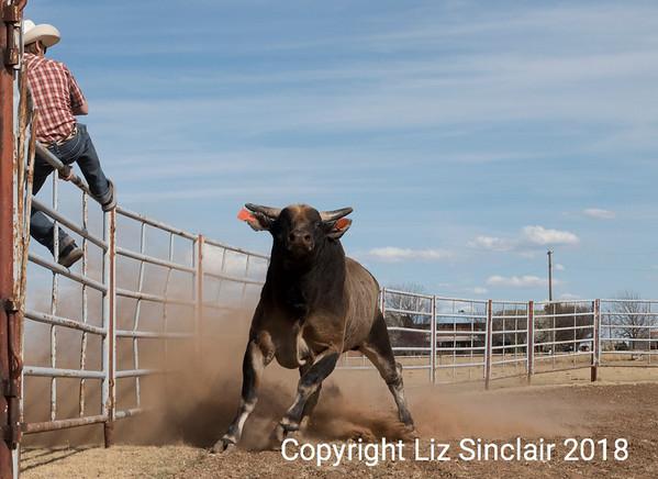 OH Buckin' Bulls