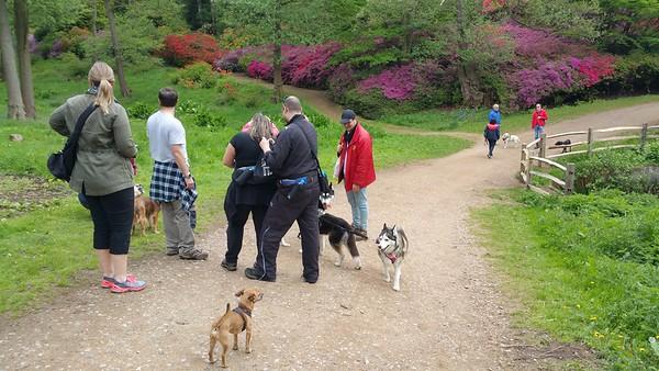 Inmarsat Dog Walk