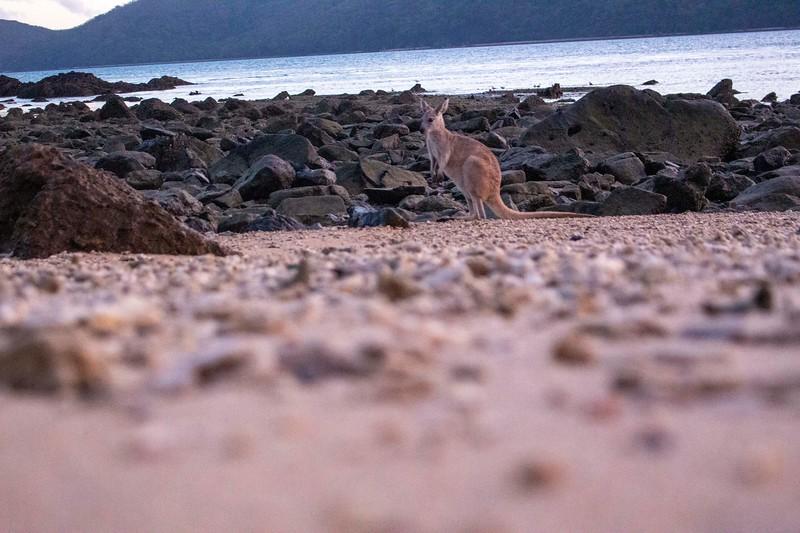 Australia_486.jpg