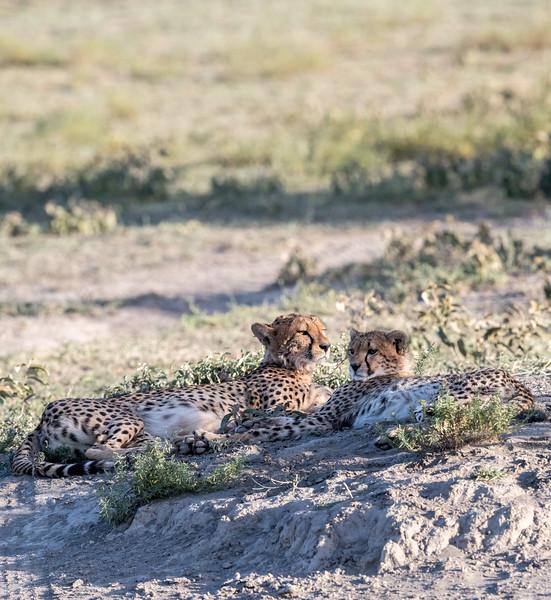 Tanzania_Feb_2018-88.jpg