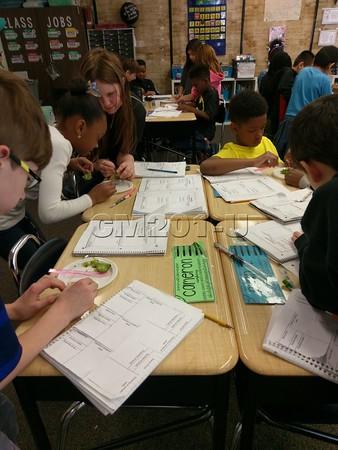 3rd Grade Seed Investigation