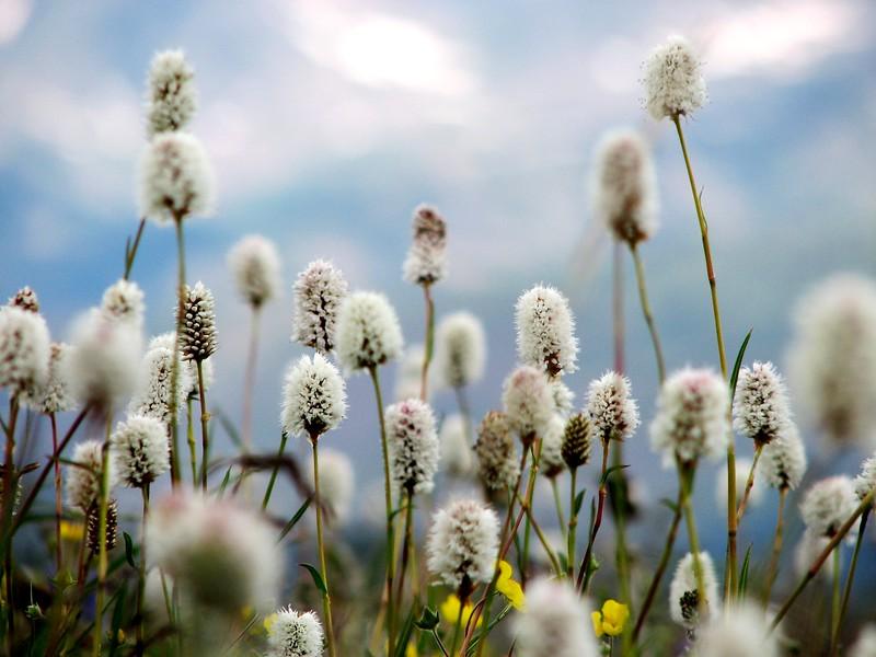 amh FLOWERS (1367).jpg