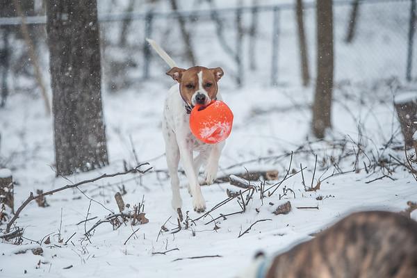 Feb 2019 Snow Dogs