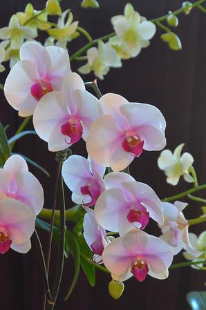 Orchid Show - Tower Hill Botanic Garden 11-2012