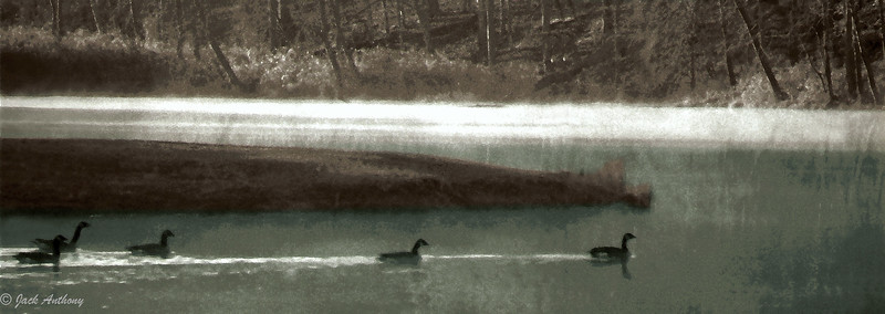 geese on the pond20x7x250.jpg