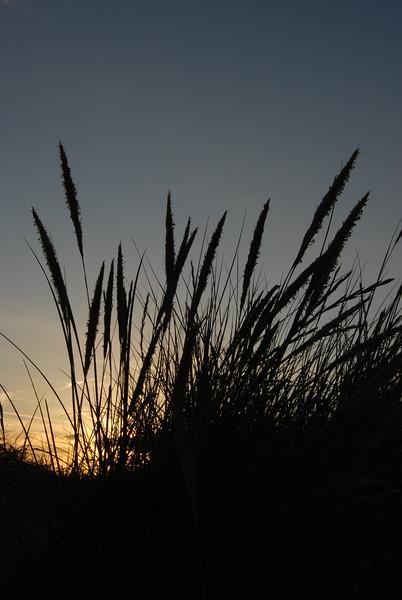 dunes (1).JPG