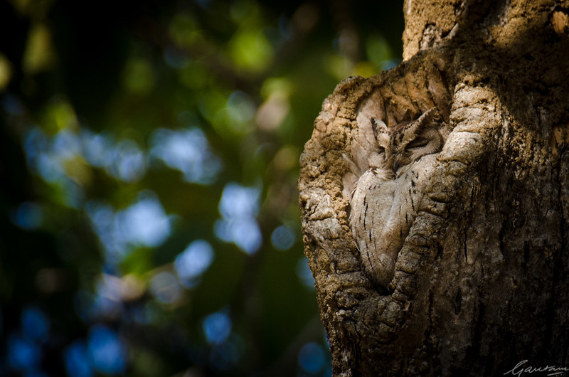 Owl Pench National Park