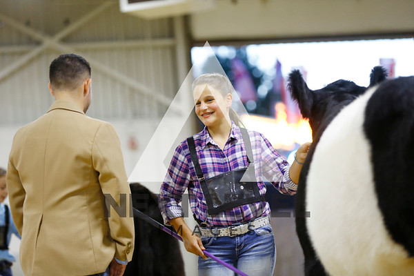 2016 Belted Galloway Junior Show Ring Shots