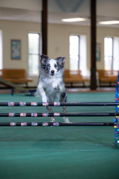 SPCA_Agility-21.jpg