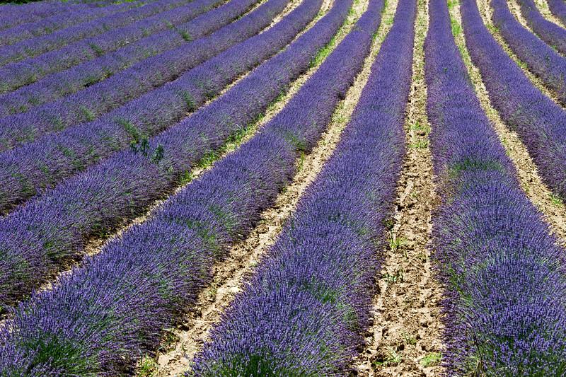 Provence- France - Jul 2013- 027.jpg